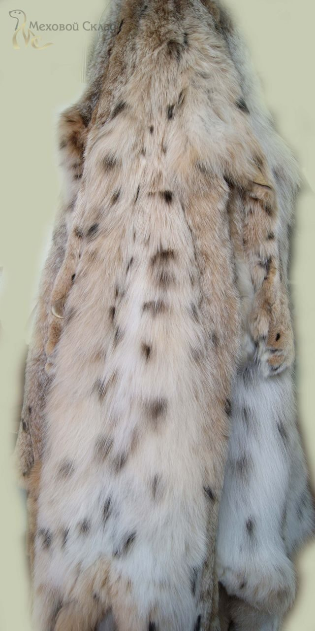 Сибирская рысь